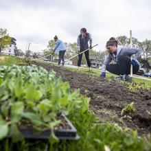 UNI volunteers work at the People's Community Garden in Waterloo.